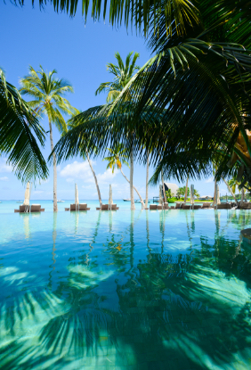 palm-trees-infinity-pool