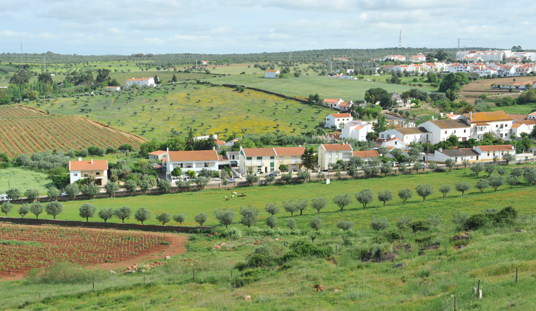Rural landscape with vineyards,olive trees and meadows with wildflowers  in Estremoz,a town in the Alentejo region.