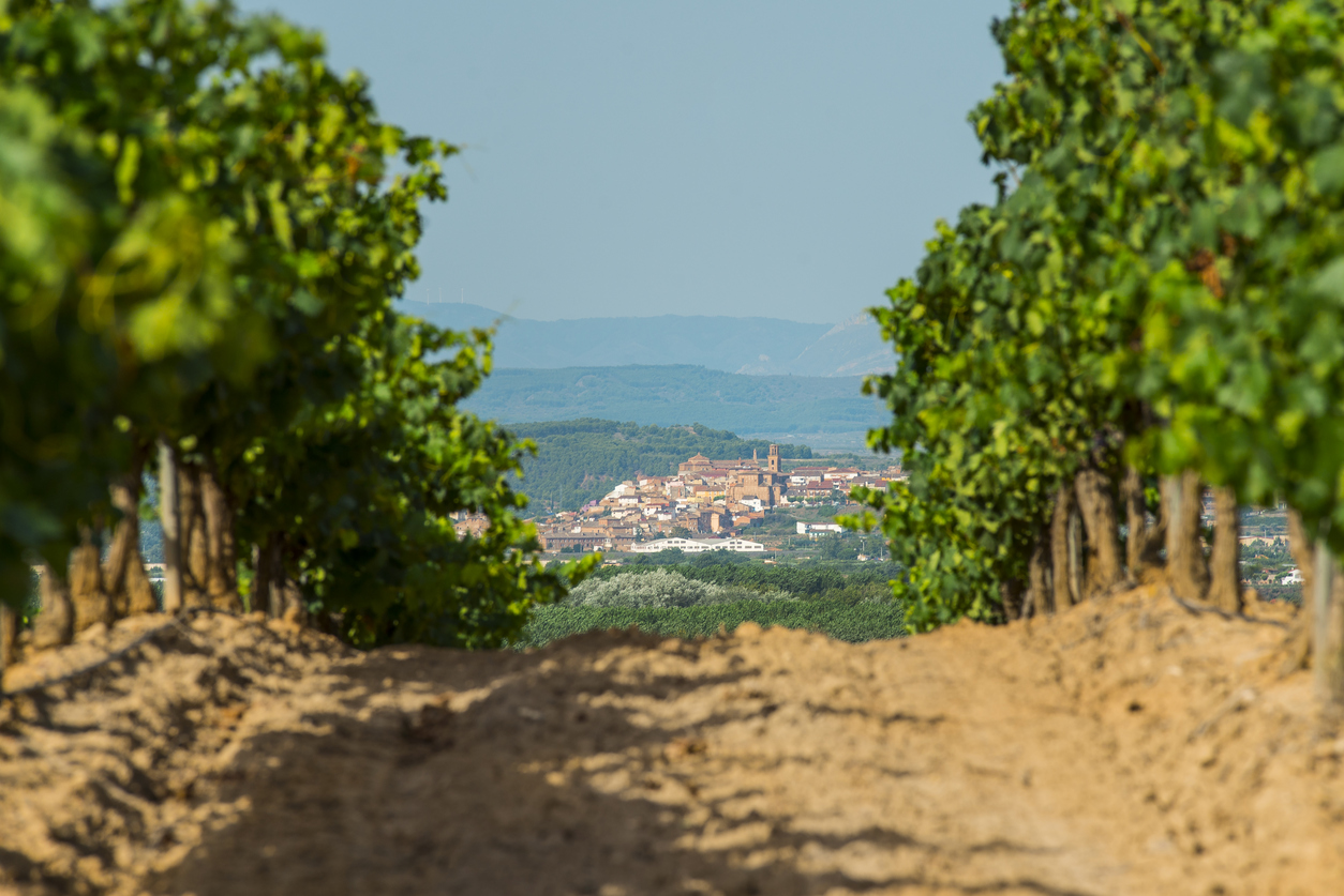 A beautiful image of a village as seen from vineyards in La Rioja region in Spain. La Rioja is known for the production of wine.