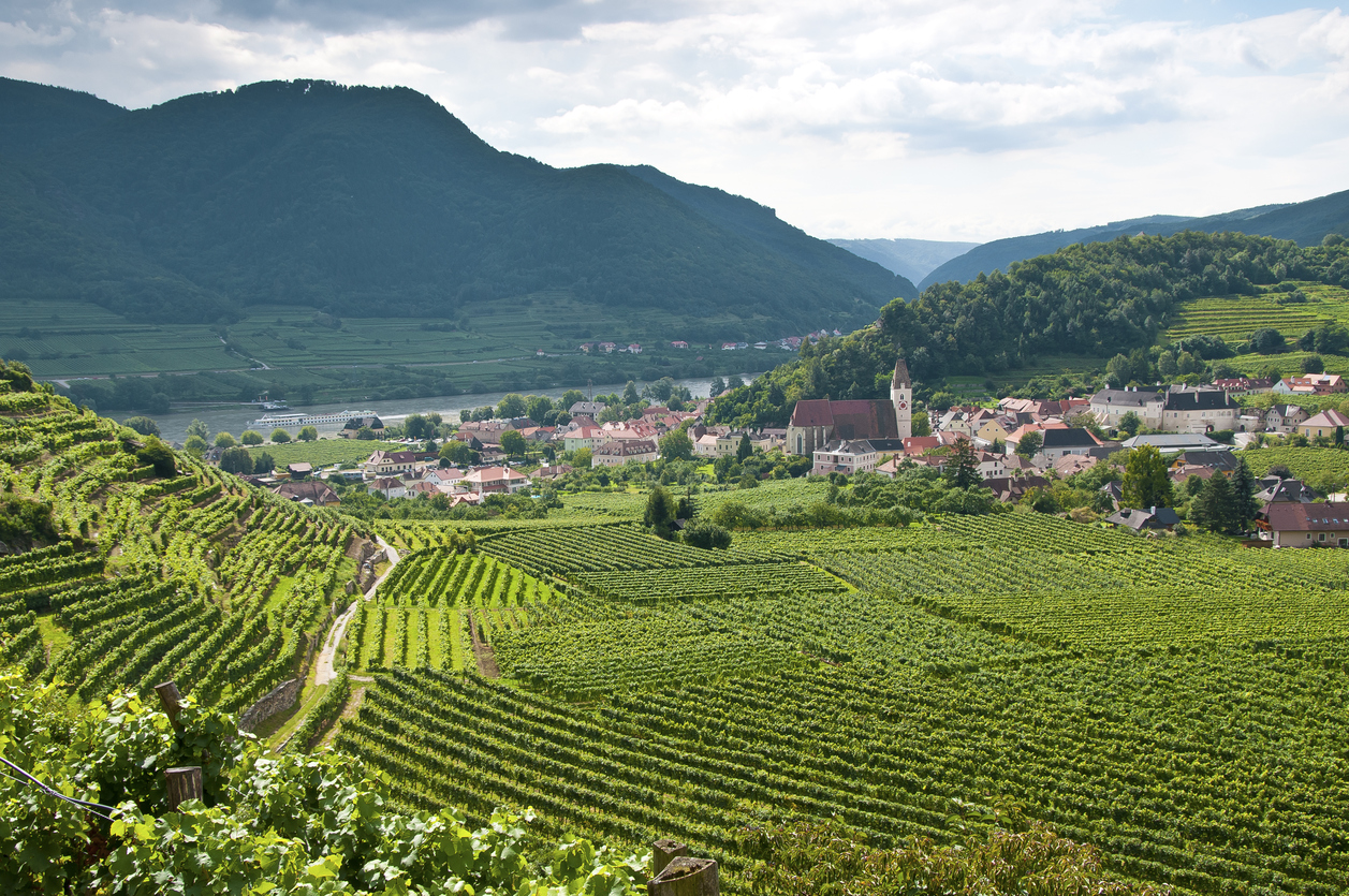 Vineyard in the famous Austrian winegrowing area Wachau (Spitz an der Donau), Lower Austria
